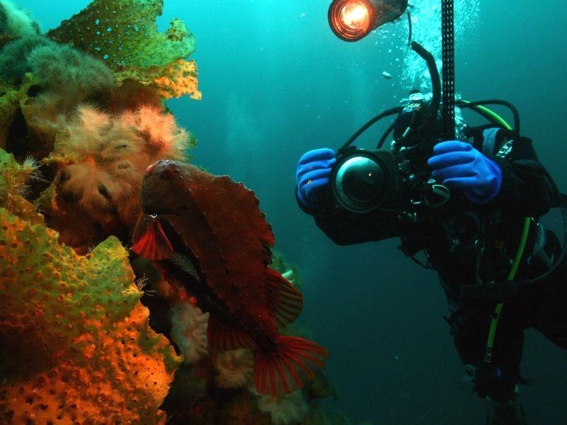 diving-tours