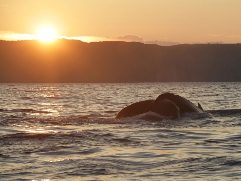 boat-tours-whale-tail