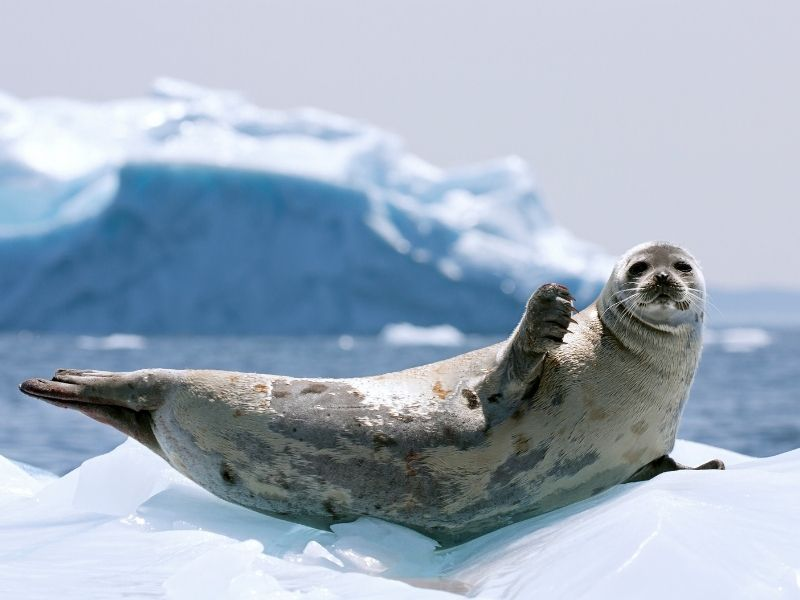 nl-vacation-packages-seal