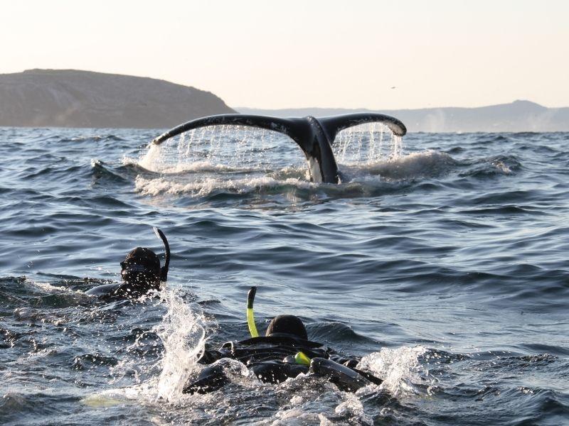 ocean-quest-snorkeling