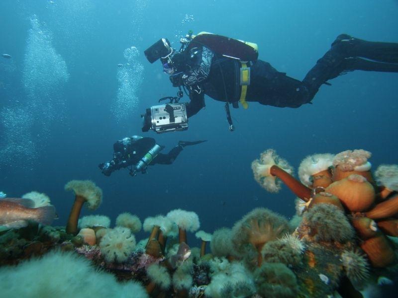 reactivate-scuba-diving-course