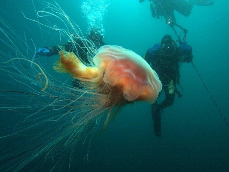 scuba-diving-course
